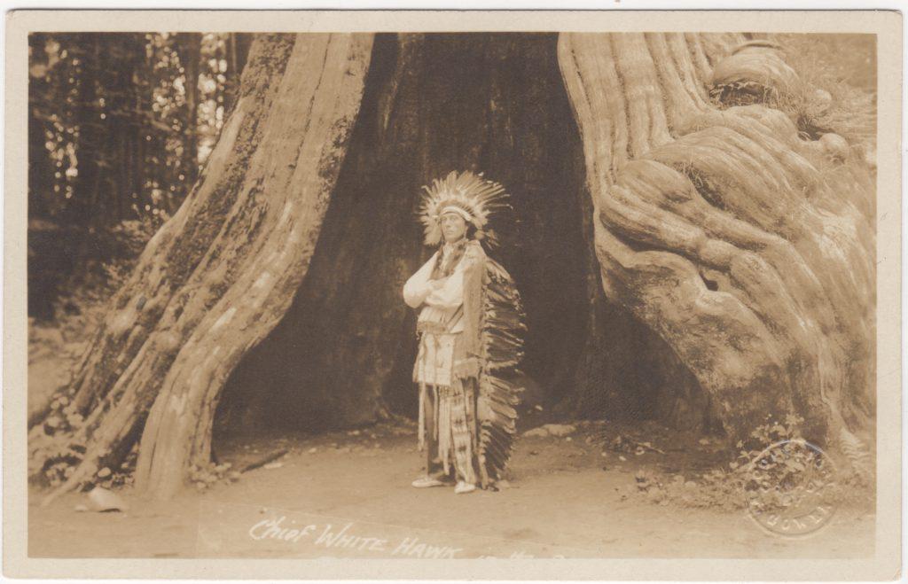 Edgar Laplante, Chief White Hawk, Arbre creux, Parc Stanley, Vancouver; ca. 1910 (SHFCB 2016.02.99)