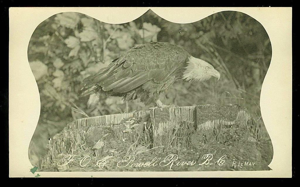 Aigle, photo par Rodolphe Lemay; ca. années 1910